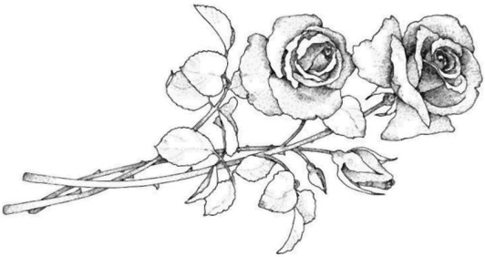 deux-roses